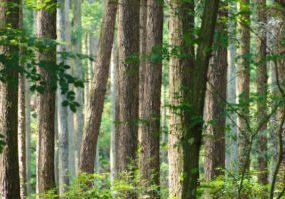 「素材」としての木「広葉樹」と「針葉樹」